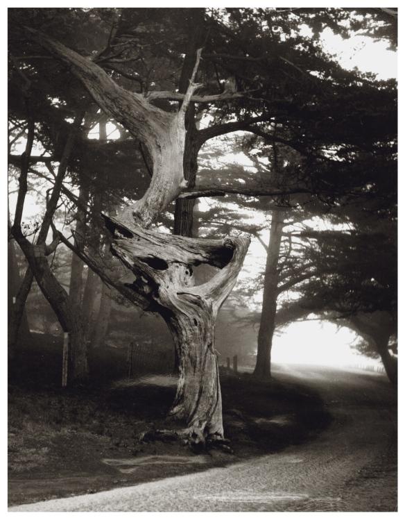 _C ghost tree
